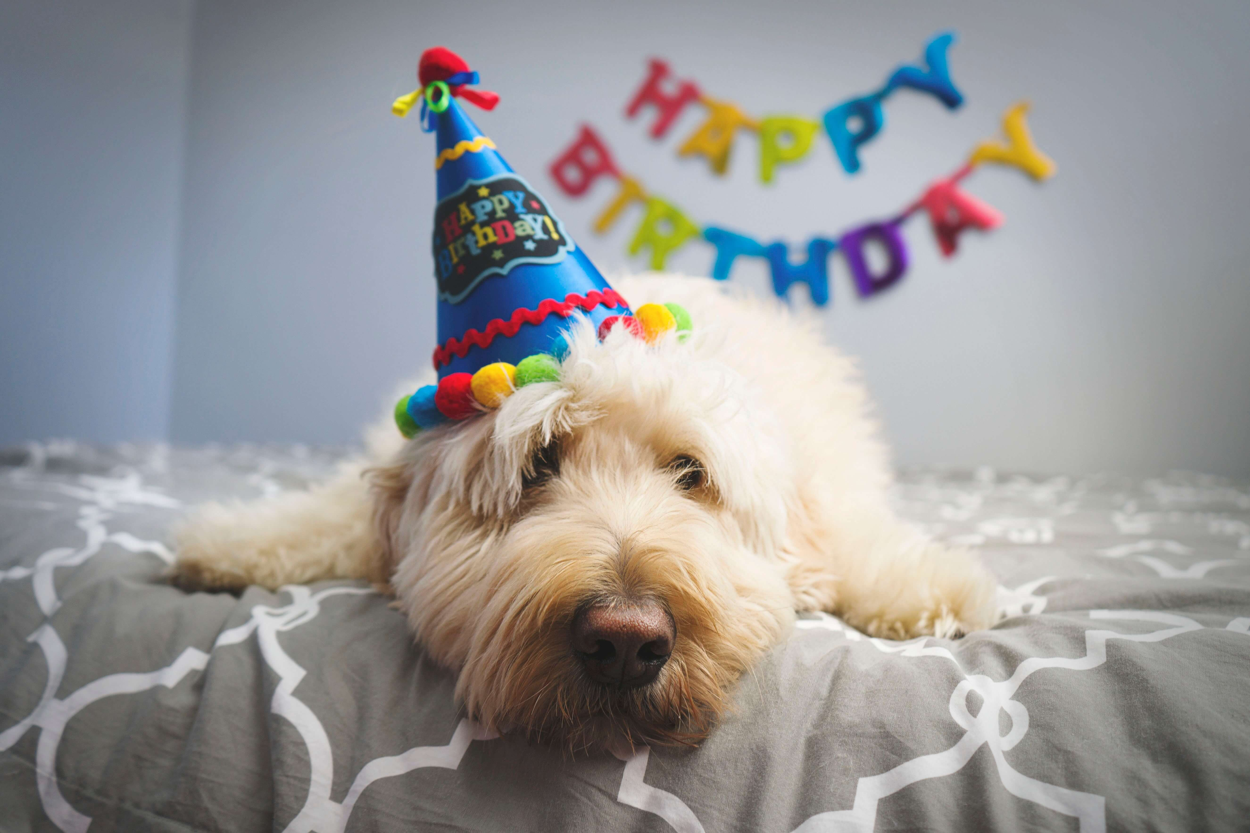 Puppy on a birthday party